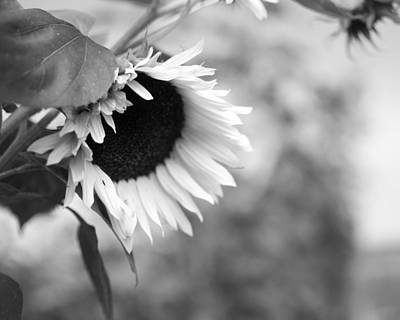 Photograph - Sunflower Garden by Miguel Winterpacht