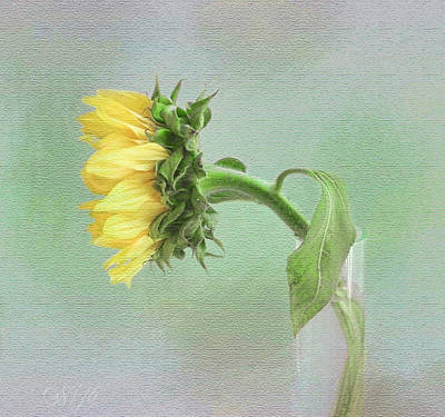 Photograph - Sunflower In Profile by Louise Kumpf