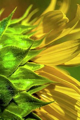 Photograph - Sunflower Macro by Kathy Clark