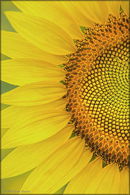 Photograph - Sunflower Petals by Erika Fawcett