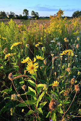 Photograph - Sunflower Sunrise At Kishwaukee Headwaters by Ray Mathis