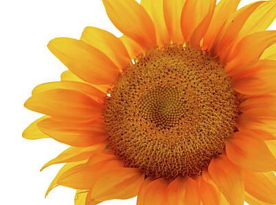 Photograph - Sunflower by Virginia Folkman