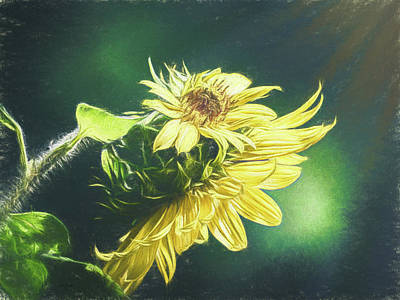 Orsillo Painting - Sunflowers by Bob Orsillo