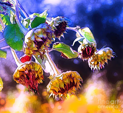 Photograph - Sunflowers In Fall by Judi Bagwell