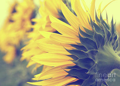Photograph - Sunflowers by Pam  Holdsworth