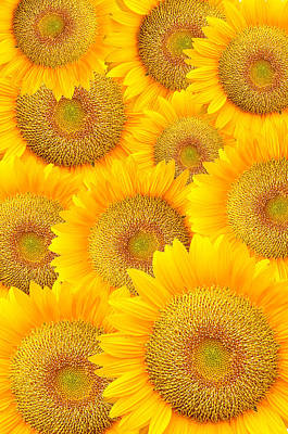 Sunflowers Original