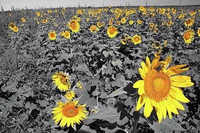 Photograph - Sunflowers by Steve Stuller