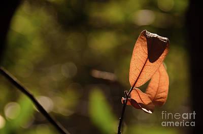 Photograph - Sunlit Veins  by Debby Pueschel