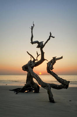 Orange Photograph - Sunrise On Driftwood by Greg Mimbs