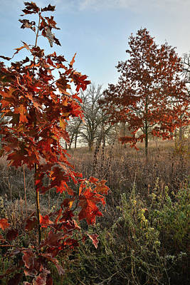 Photograph - Sunrise On Oaks In Glacial Park by Ray Mathis