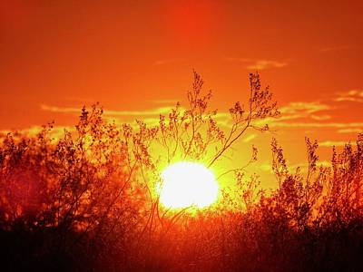 Photograph - Sunrise Through The Creosote by Judy Kennedy