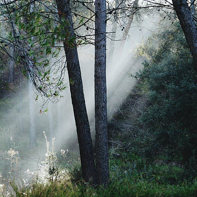 Sunrays Through The Foggy Forest Art Print by Guido Montanes Castillo