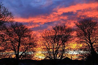 Photograph - Sunset And Filigree by Nareeta Martin