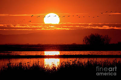 Photograph - Sunset At The Refuge by Mimi Ditchie