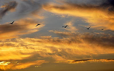 Art Print featuring the photograph Sunset Flight by AJ Schibig