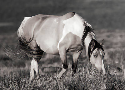 Photograph - Sunset Graze by Athena Mckinzie