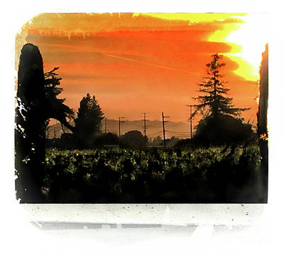 Photograph - Sunset In The Vineyards by Leslie Hunziker