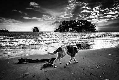 Photograph - Sunset Stroll by Pixabay