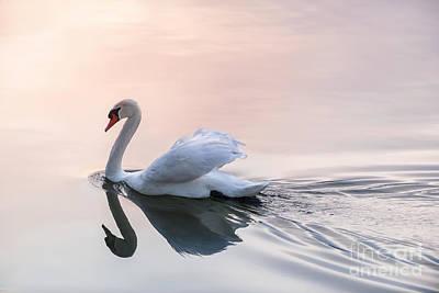 Animals Photos - Sunset swan 2 by Elena Elisseeva