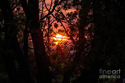 Photograph - Sunset Through The Trees by Cheryl Baxter