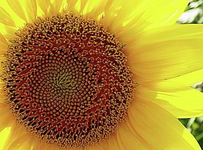 Photograph - Sunshine by Karen McKenzie McAdoo