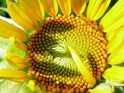 Sunshine On My Sunflower Art Print by Christine Belt