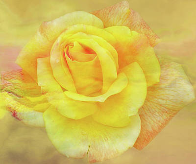 Photograph - Sunshine Rose by Larry Bishop