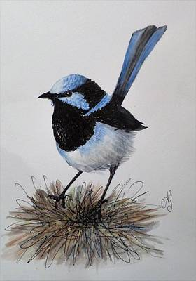 Painting - Superb Blue Wren by Anne Gardner
