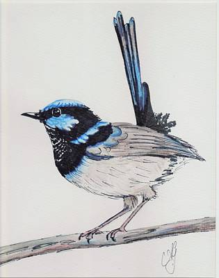 Painting - Superb Fairy Wren 3 by Anne Gardner