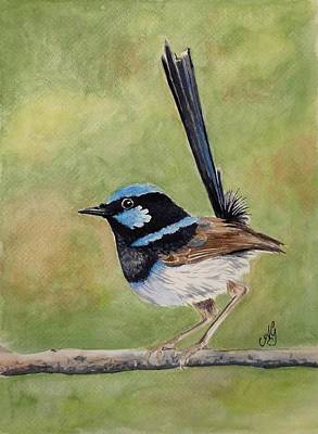 Painting - Superb Fairy Wren by Anne Gardner