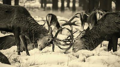 Photograph - Supremacy by Unsplash