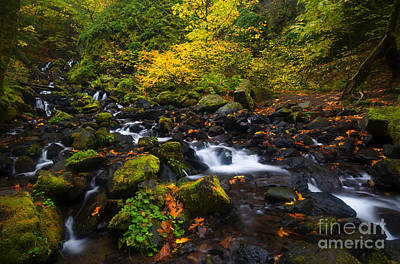 Photograph - Surrounded By Autumn by Mike Dawson