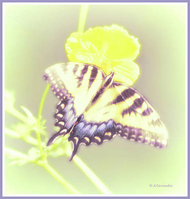 Photograph - Swallowtail Butterfly by A Gurmankin