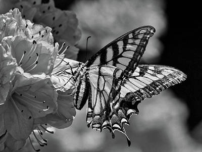 Photograph - Swallowtail Butterfly by James DeMers