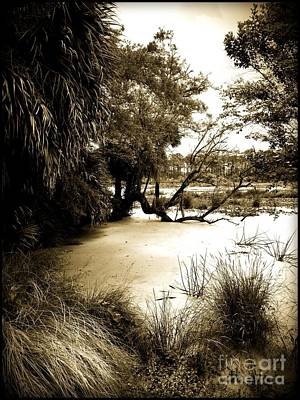 Photograph - Swamp by Janice Spivey