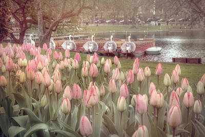 Photograph - Swan Boats And Tulips - Boston Public Garden by Joann Vitali