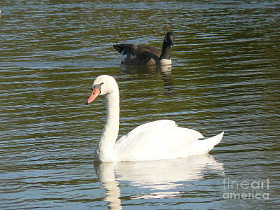 Art Print featuring the photograph Swan by Elizabeth Fontaine-Barr