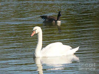 Swan Art Print by Elizabeth Fontaine-Barr