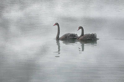 Photograph - Swan Lake by Carolyn Dalessandro