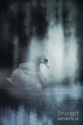 Photograph - Swan Of Glass by John Anderson
