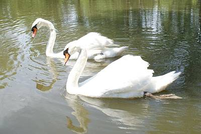 Swan Pair Original by Geralyn Palmer