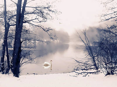 Photograph - Swan Song  by Jessica Jenney