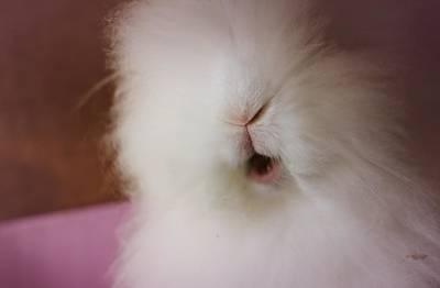 In Love Photograph - Sweet Bunny by The Art Of Marilyn Ridoutt-Greene