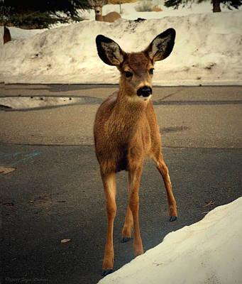 Photograph - Sweet Deer Of Sisters Oregon by Joyce Dickens