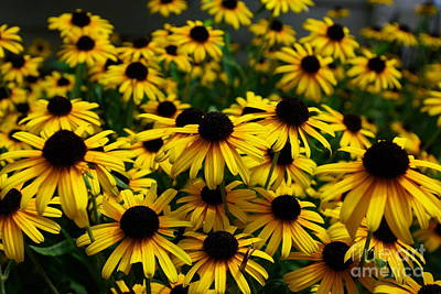 Photograph - Sweet Flowers by John S