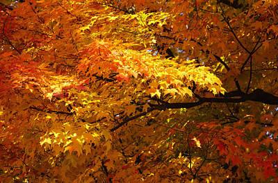 Simply Brilliant Photograph - Sweet Sweet Autumn by Rachel Cohen