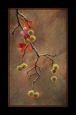 Photograph - Autumn Sweetgum 1 by Lauren Brice