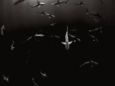 Frenzy Photograph - Swimming With Sharks by Jakob Owens