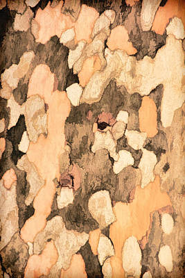 Photograph - Sycamore Bark Pnt by Theo O'Connor