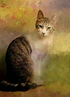 Gray Tabby Photograph - Tabby Portrait by Diana Angstadt